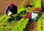 Agricoltura, bloccati in Abruzzo i contratti provinciali